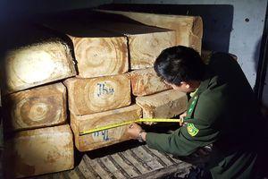Lâm Đồng: Bắt đối tượng vận chuyển gỗ Pơmu