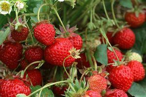 Cẩn thận trước các loại rau củ quả quen thuộc nhưng 'ngậm' thuốc bảo vệ thực vật nhiều nhất