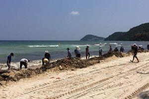 Hàng chục tấn lục bình chết trôi dạt ra bờ biển Phú Quốc