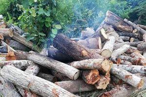 Đắk Lắk: Côn đồ tạt xăng đốt gỗ tang vật và cán bộ kiểm lâm
