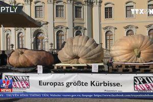 Cuộc thi bí ngô khổng lồ châu Âu