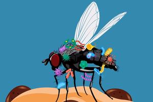 Điều gì xảy ra khi ruồi đậu lên thức ăn của bạn?