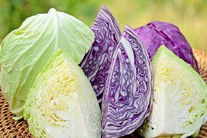 Cách chọn bắp cải ngon cực chuẩn và an toàn cho bữa cơm gia đình