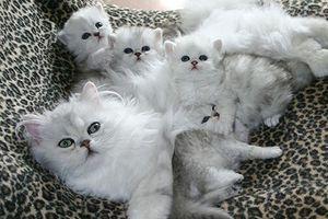 Tan chảy với hình ảnh mẹ mèo và đàn mèo con dễ thương