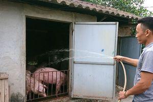 Sản lượng chăn nuôi không giảm, tại sao thịt lợn tăng chóng mặt? - Bài 1: Mất đối trọng trong chăn nuôi