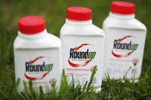 Án phạt 250 triệu đô la với Monsanto có thể bị hủy