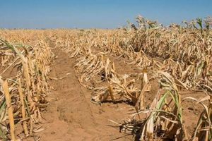 Trái đất càng nóng, càng nhiều người đói