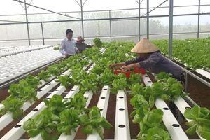 Đô thị Đà Nẵng: Giải bài toán việc làm cho nông dân