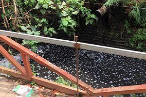 Kinh hãi nước thải đen ngòm xả trực tiếp ra môi trường ở La Phù