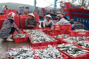 Chỉ 4 ngày ra khơi, một ngư dân trúng đậm mẻ cá bạc má hơn 10 tấn