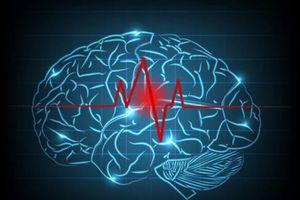 Các nhà nghiên cứu Hàn Quốc tạo ra 'lưu huyết não đồ' mới