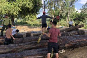 Quảng Nam phát hiện gỗ lậu trên sông Thu Bồn