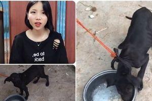 Cho chó uống thuốc cường dương để tăng lượt theo dõi, cô gái khiến cư dân mạng phẫn nộ