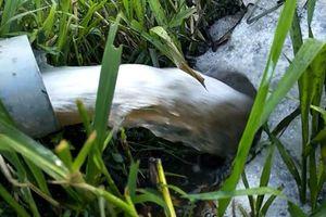 Triệu Sơn (Thanh Hóa): Người dân bức xúc bởi trang trại lợn gây ô nhiễm môi trường