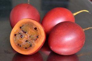 Cà chua thân gỗ 'gây sốt' một thời giờ ra sao?