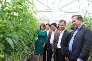 Lào Cai tạo đột phá từ vùng sản xuất hàng hóa qui mô lớn