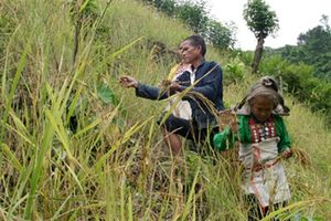 Vì sao giao đất, giao rừng cho người dân khó vậy?
