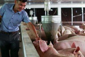 Giá heo hơi hôm nay 17/10: Giá lợn hơi có xu hướng giảm, vì sao?