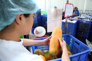 Xuất khẩu rau quả lao đao