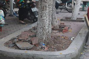 Cán bộ tổ dân phố tự ý đốn hạ 3 cây gỗ sưa