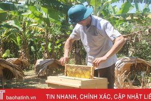 Nuôi ong lấy mật, 'bỏ túi' 100 triệu đồng đồng mỗi năm