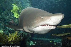 Cảnh sát truy lùng người đàn ông khỏa thân nhảy vào bể cá mập