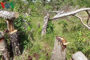 Hiện trường vụ phá rừng mới ở khu bảo tồn thiên nhiên Tà Cú