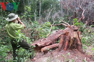 Đề nghị khởi tố vụ án phá rừng tại Khu bảo tồn thiên nhiên Tà Cú