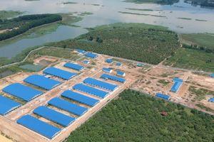 Sẽ tháo dỡ trại heo khổng lồ đầu nguồn cấp nước cho 10 triệu dân