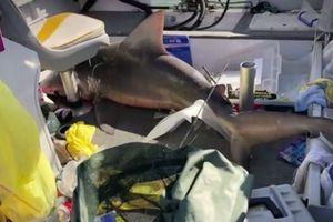 Cá mập 'hạ cánh' xuống thuyền người đi câu
