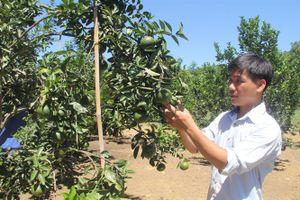 Từ vùng đất hoang, chàng trai trẻ biến thành vườn cây trái thu tiền tỷ