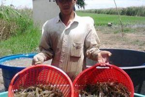 Kiên Giang: Khấm khá nhờ trồng cây, nuôi con đặc sản
