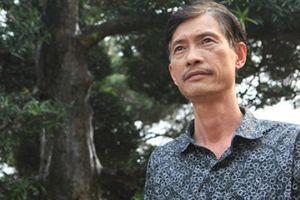 Có một vườn tùng la hán Nhật nghìn tỷ giữa lòng Hà Nội: Mỗi cây có giá cả tỷ đồng