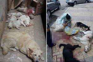 Chó lang thang bị đầu độc, bắn giết vô tội vạ gây rùng mình