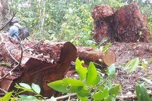 Củng cố hồ sơ khởi tố 2 vụ phá rừng lớn tại Khu bảo tồn thiên nhiên Tà Cú