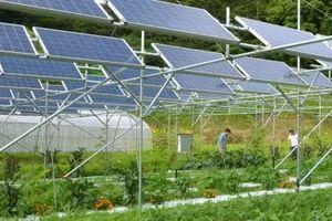 Ninh Thuận: 9 tháng bổ sung thêm 15 dự án điện mặt trời vào quy hoạch