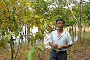 Phát triển rừng kết hợp du lịch sinh thái
