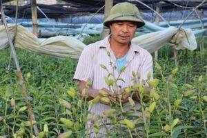 Nông thôn mới ở Sa Pa ngày càng 'nở hoa, kết trái'