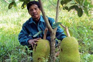 Hội Nông dân Hòa Vang: Vận động người dân hiến hơn 51.000m2 đất