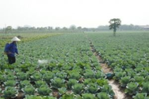 Nâng cao hiệu quả quản lý và sử dụng thuốc bảo vệ thực vật