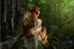Bức ảnh Thế giới hoang dã của năm