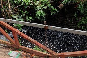 Phó Chủ tịch xã La Phù xử lý ô nhiễm môi trường kiểu 'tình làng, nghĩa xóm'?