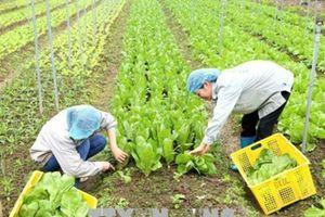 Hà Nội: Khuyến khích phát triển sản xuất nông nghiệp hữu cơ