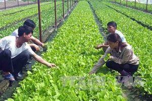 Hà Nội: Xây dựng 5-10 mô hình sản xuất nông nghiệp hữu cơ