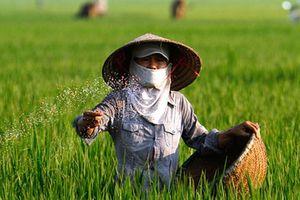Giá phân bón ở Việt Nam rất cao vì phải 'gánh' nhiều tầng đại lý