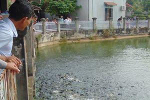 Nuôi trồng thủy sản dùng chế phẩm sinh học thế hệ mới Hiệu quả gấp 1,5
