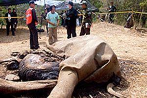Cuộc chiến quyết liệt bảo vệ động vật hoang dã ở Thái Lan