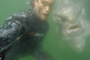 Cá thái dương làm mặt cực ngầu 'tự sướng' cùng người