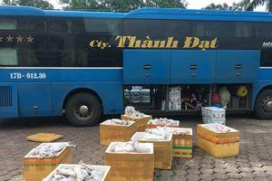 Bắt giữ gần 1 tấn thịt mèo không rõ nguồn gốc vận chuyển về Thái Bình