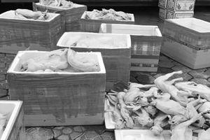 Bắt giữ 1 tấn thịt mèo không nguồn gốc vận chuyển ra miền Bắc tiêu thụ